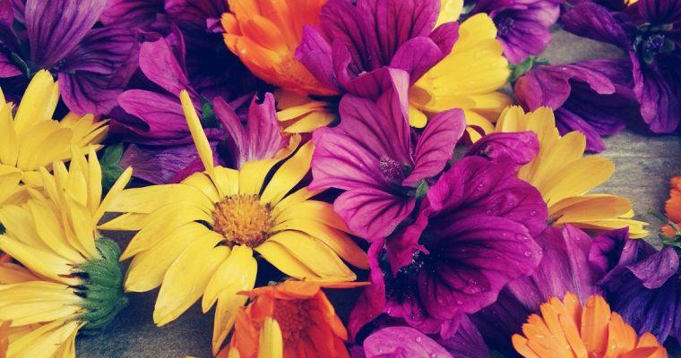 Malventee – Heilkraft aus Blütenpracht