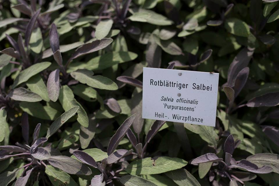 Schon der Hofbotaniker von Ludwig dem II. schätzte diese Pflanze!