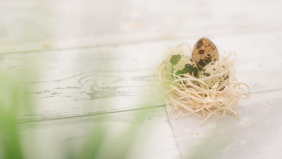Wachteileier zu Ostern?