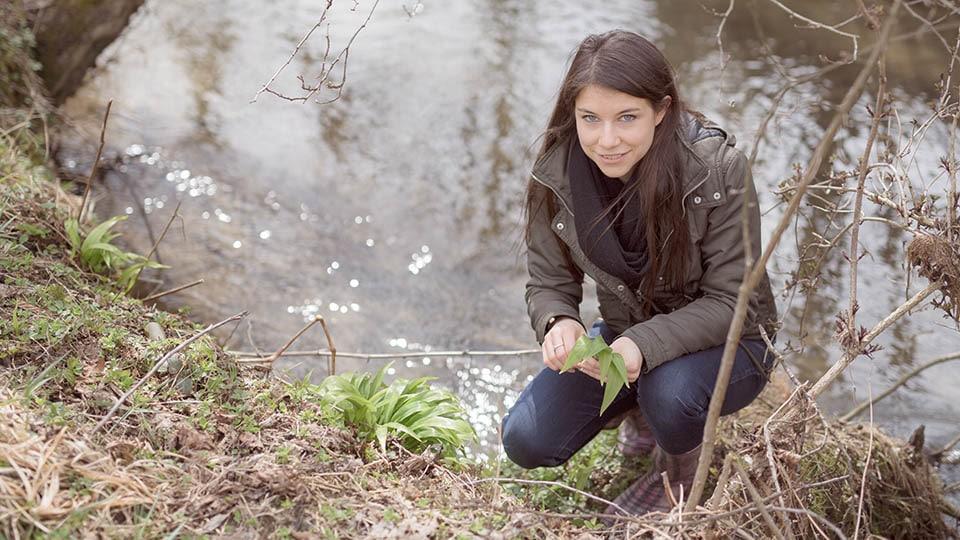 Bärlauch – Tipps zum Ernten