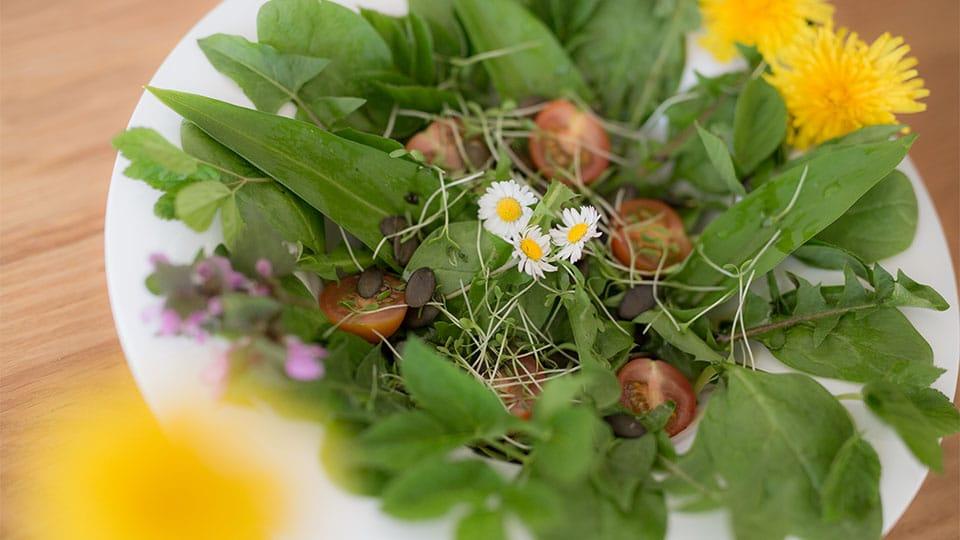 Leckerer Salat mit Wildkräutern