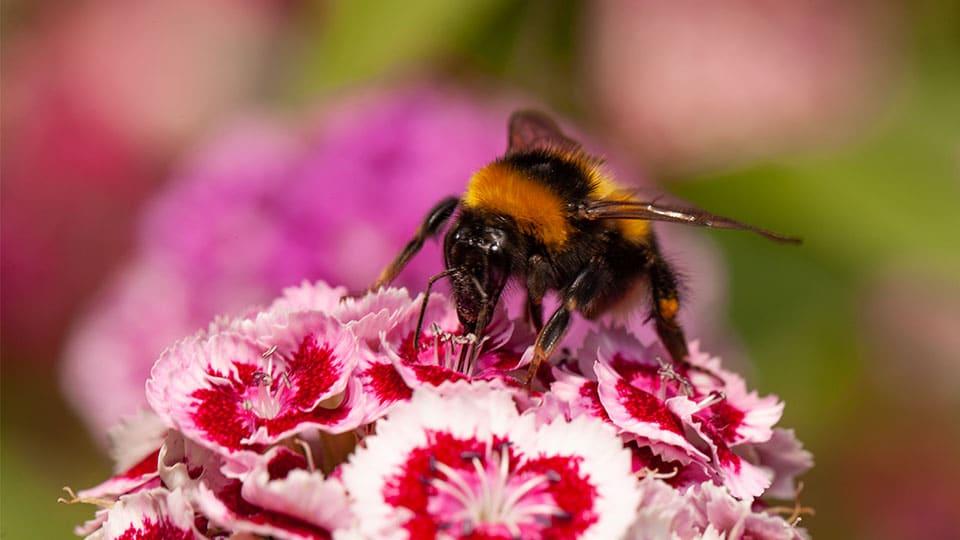So rettest du schwache Bienen und Hummeln