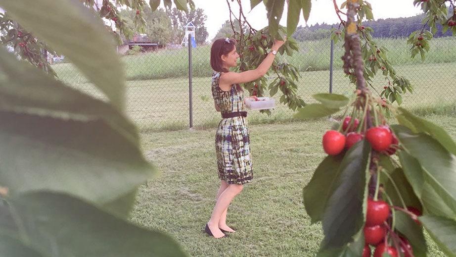 Sandra pflückt Kirschen