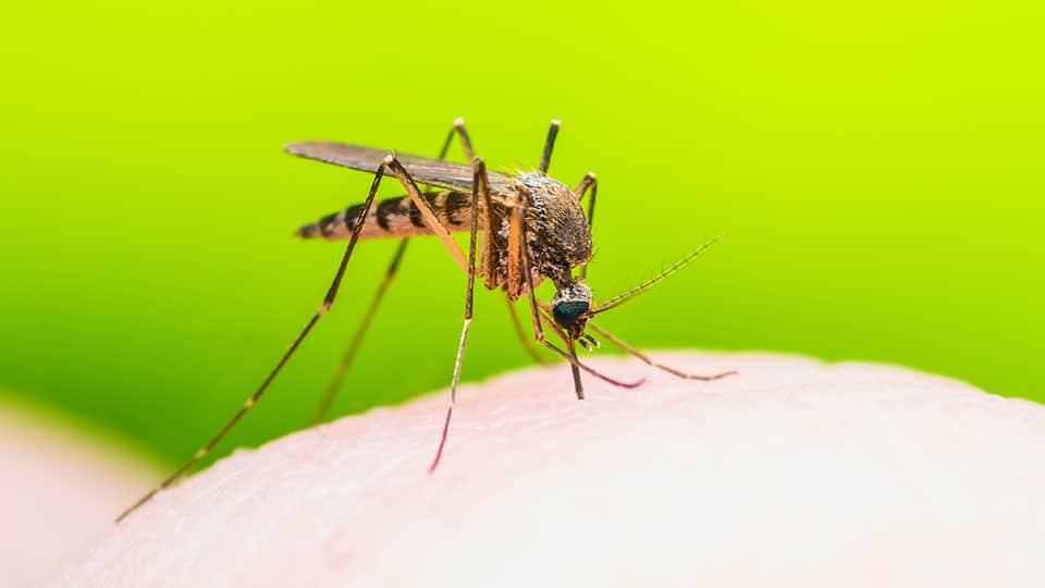 So hältst du Mücken ganz ohne Chemie fern