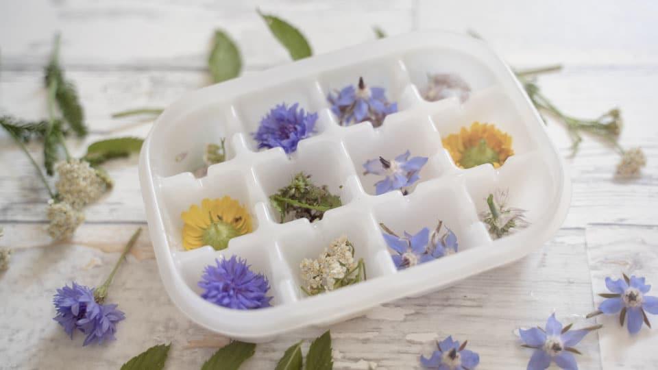 Eiswürfel mit Blüten und Kräutern