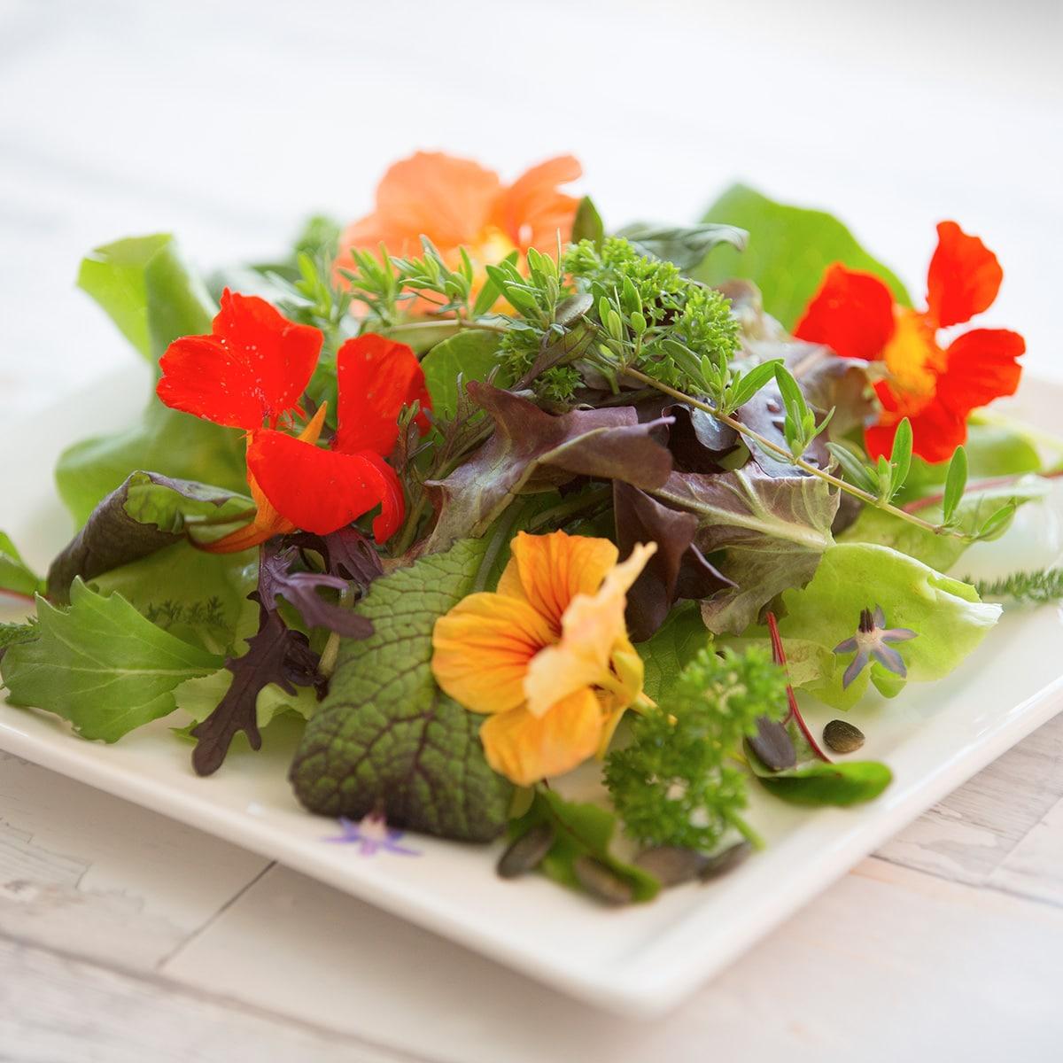 Die richtige Ernährung als Basis der Gesundheit
