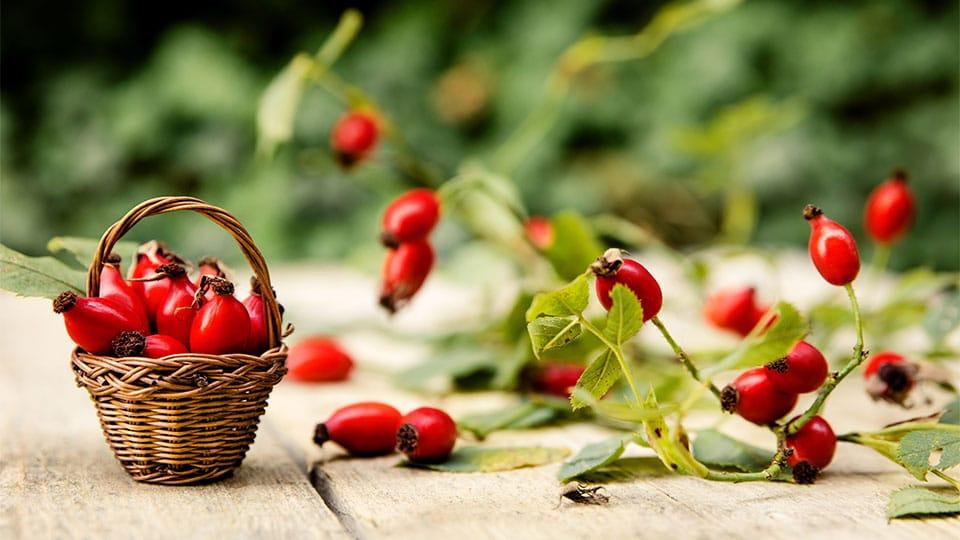 Hagebuttenpulver – Natürliches Vitamin C Pulver selbst herstellen