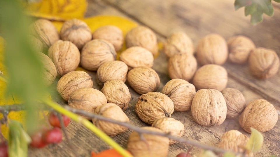 Walnüsse fürs Gehirn und Tee aus Walnussblättern