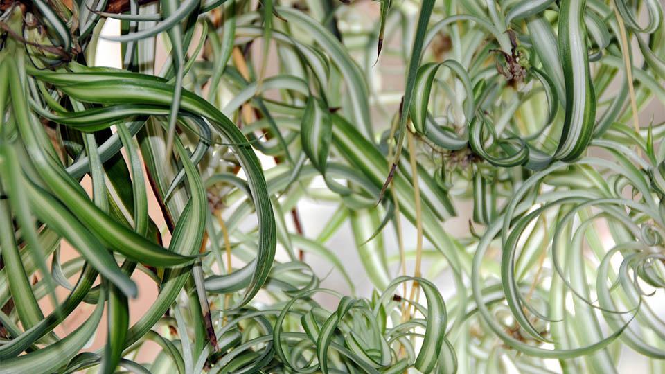 pflanzen raumklima
