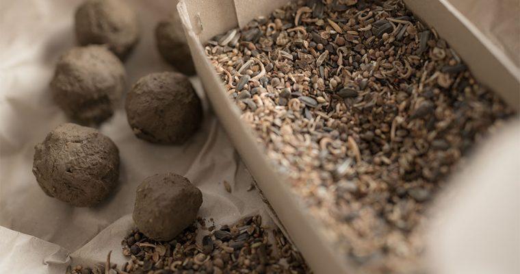 Samenbomben selber machen für Bienen und Insekten