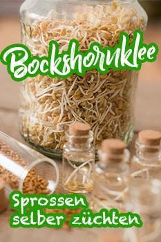 bockshornklee