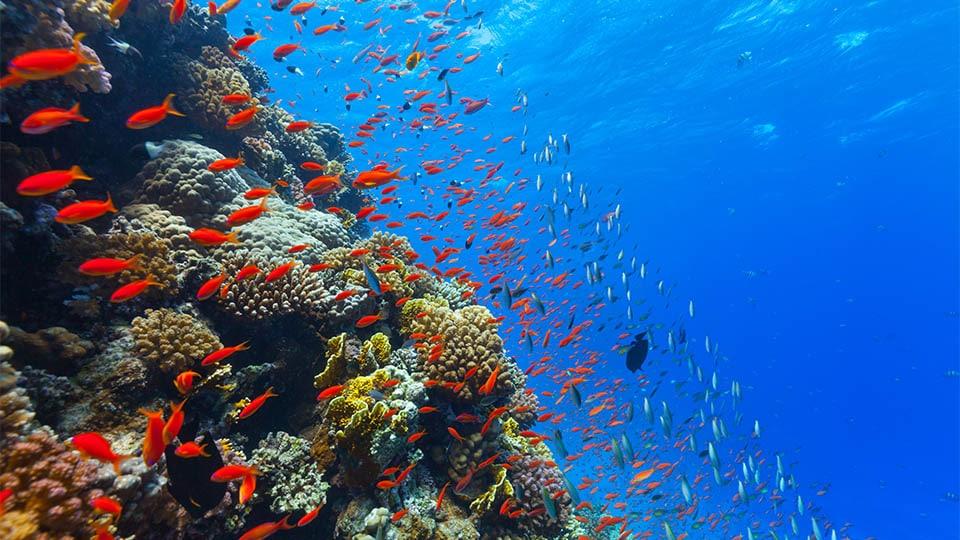 sonnencreme korallenriff