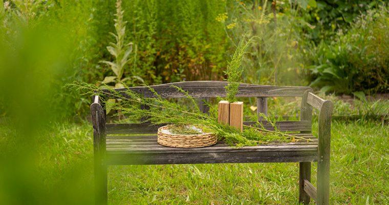 Der einjährige Beifuß (Artemisia annua) – eine mächtige Heilpflanze