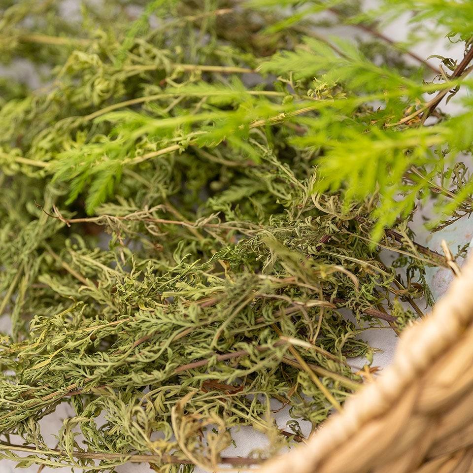 Artemisia annua im getrockneten Zustand