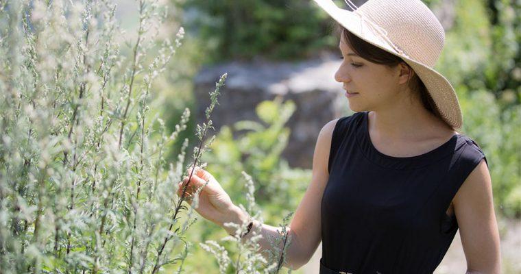 Beifuß – Warum du die heimische Wildpflanze jetzt ernten solltest