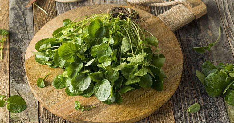 Brunnenkresse – das gesündeste Gemüse der Welt!