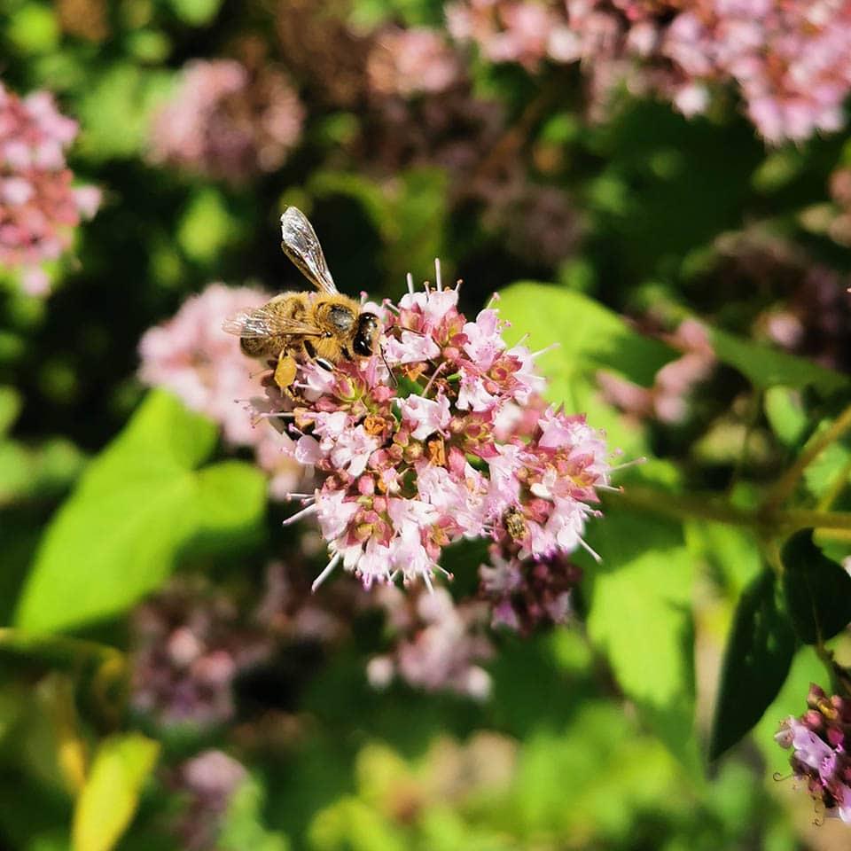 Dost mit Biene