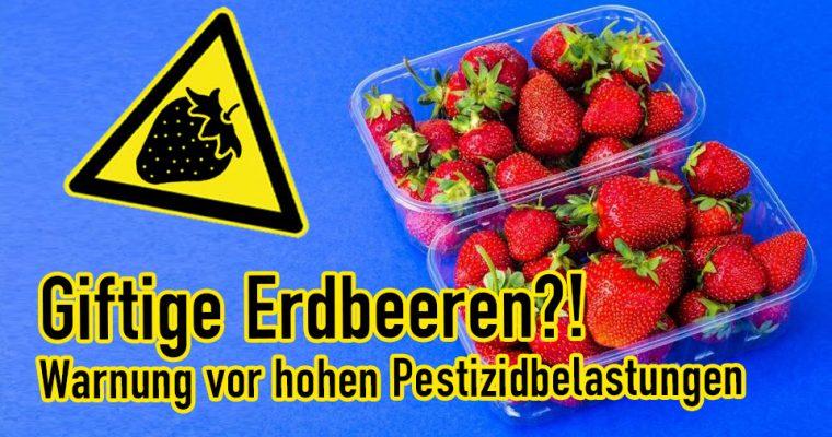 Giftige Erdbeeren?! Erschreckende Pestizidbelastungen bei Erdbeeren