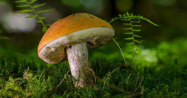 5 Fakten über Pilze die du wissen musst!