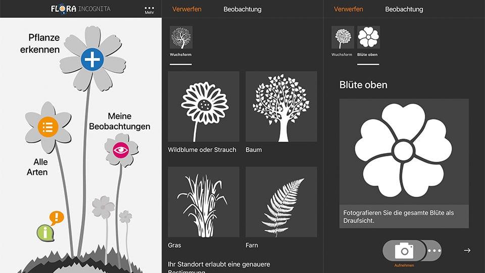 App zum Kräuter und Planzen erkennen: Flora Incognita