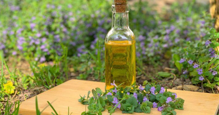 Gundermann: Rezepte und Verwendung als Heilpflanze