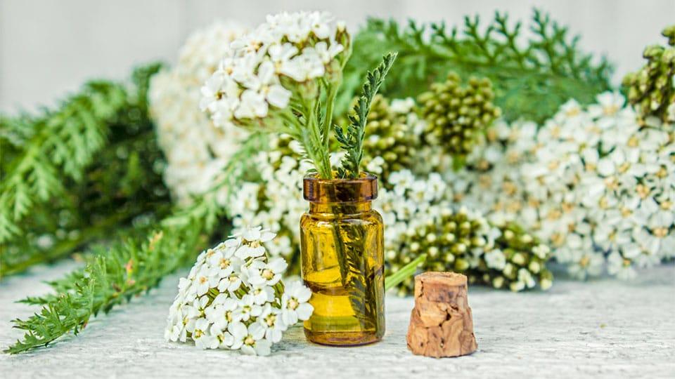 Heilpflanzen zur Wundheilung und Regeneration der Haut