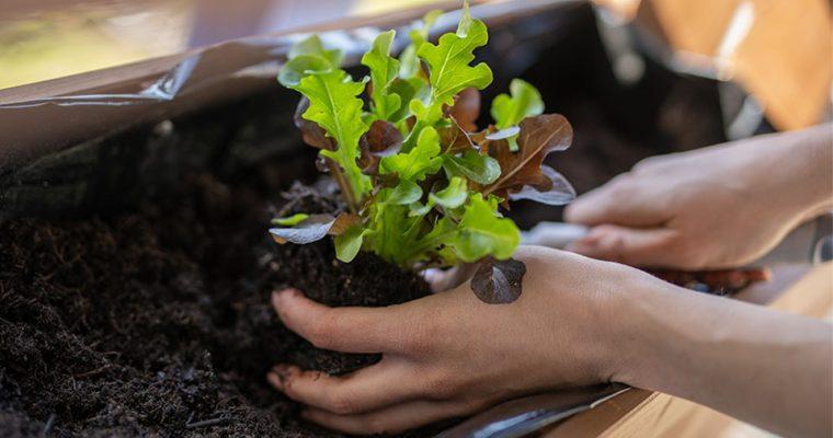 Balkongarten: Gärtnern auf engstem Raum mit dem Etagen – Hochbeet