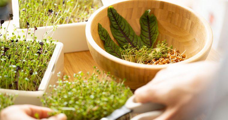 So wachsen Kräuter und Sprossen in der Küche besonders gut