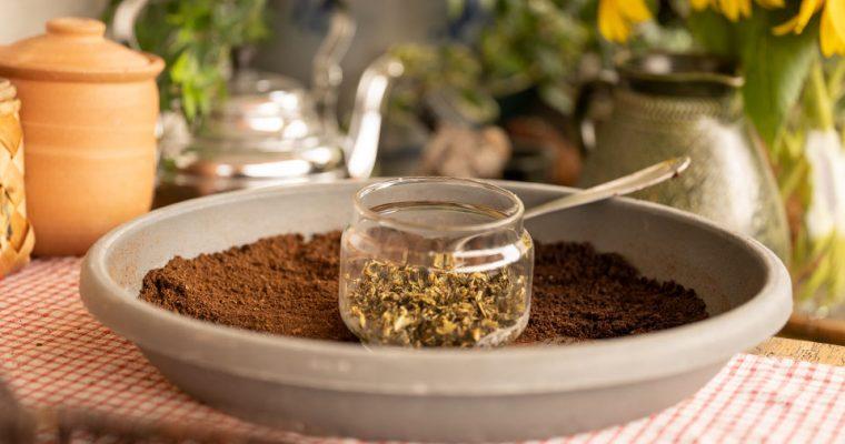 Kaffeesatz – der ultimative Dünger für deine Pflanzen