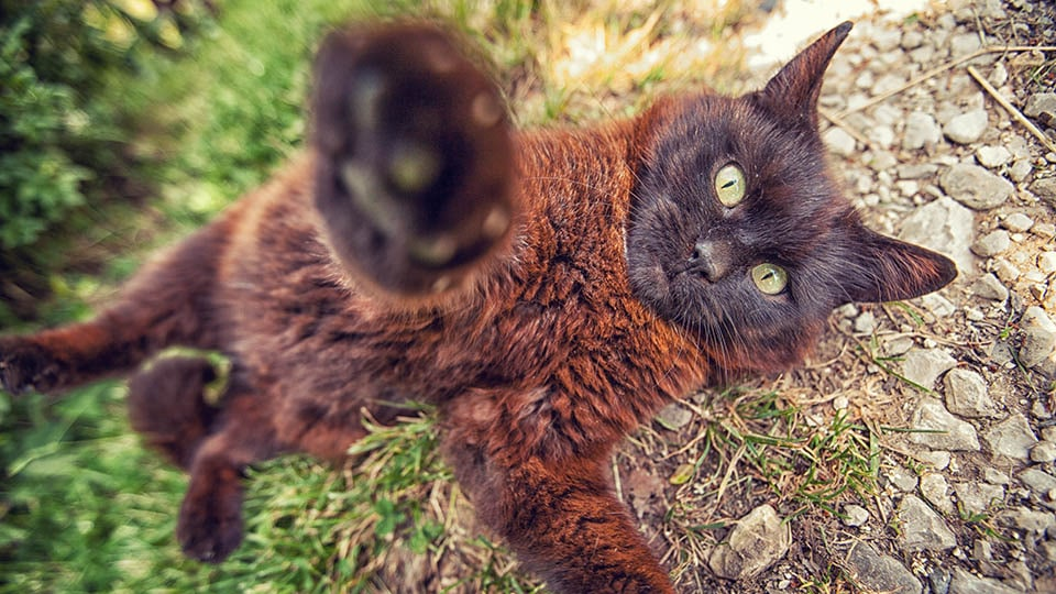 Macht Katzenminze high?