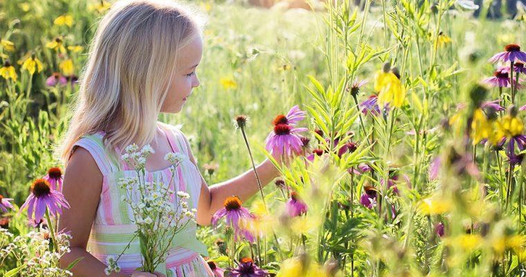 5 Ideen für das Basteln mit Kindern mit Wildkräutern