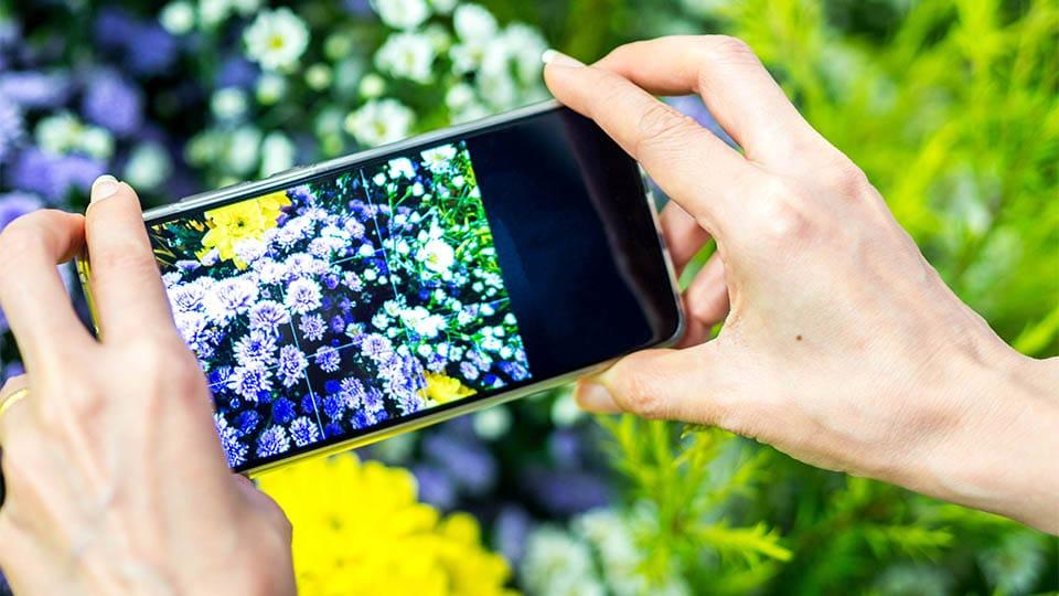 Kräuter und Pflanzen mit dem Smartphone erkennen