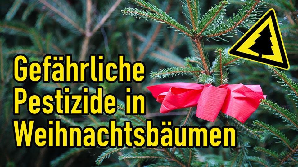 Pestizide in Weihnachtsbäumen