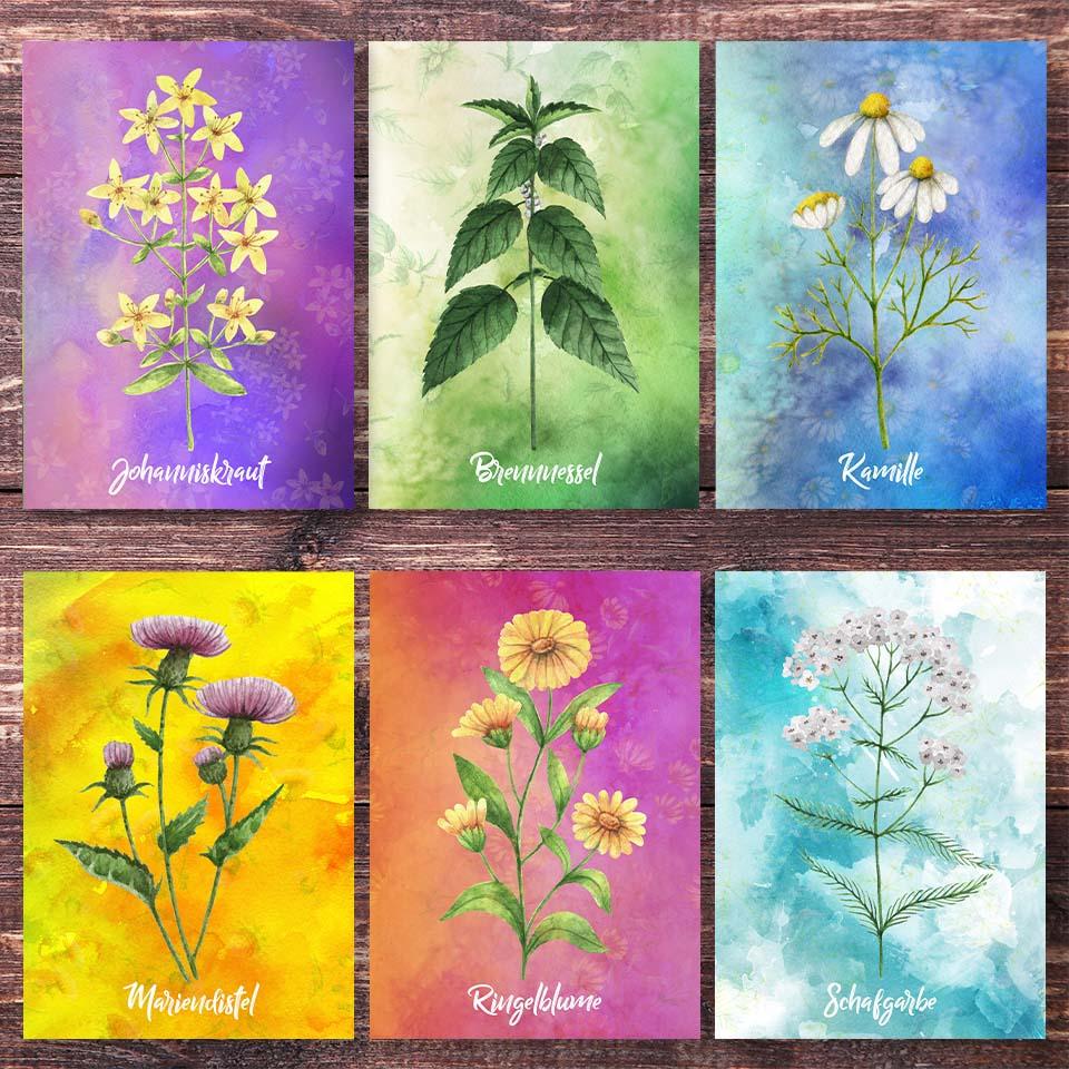 Postkarten Wildkräuter
