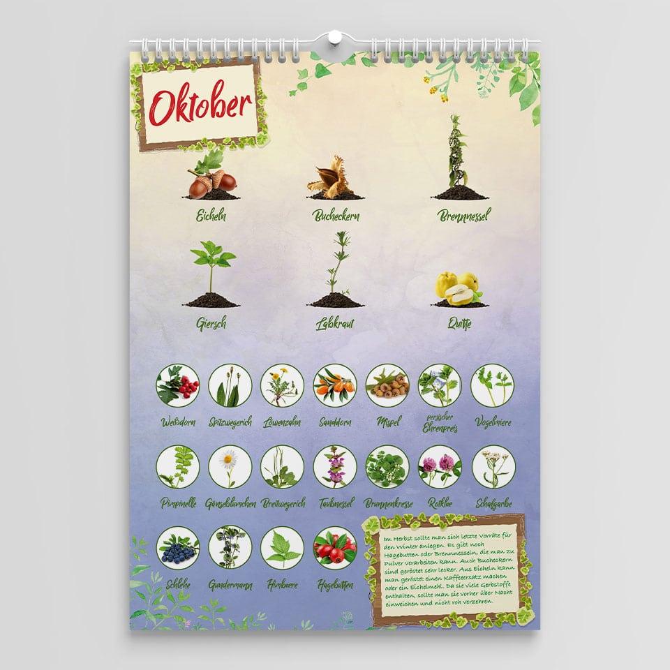Saisonkalender für Wildkräuter im Oktober