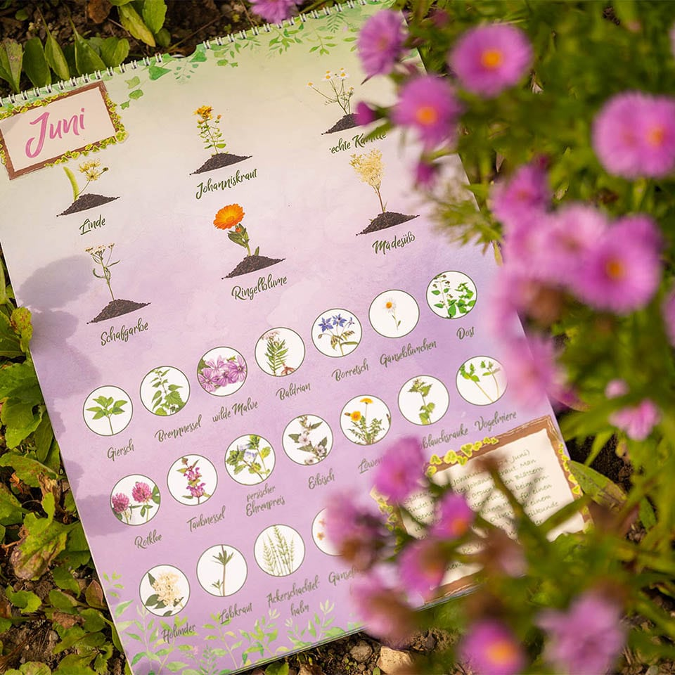 Saisonkalender für Wildkräuter im Monat Juni