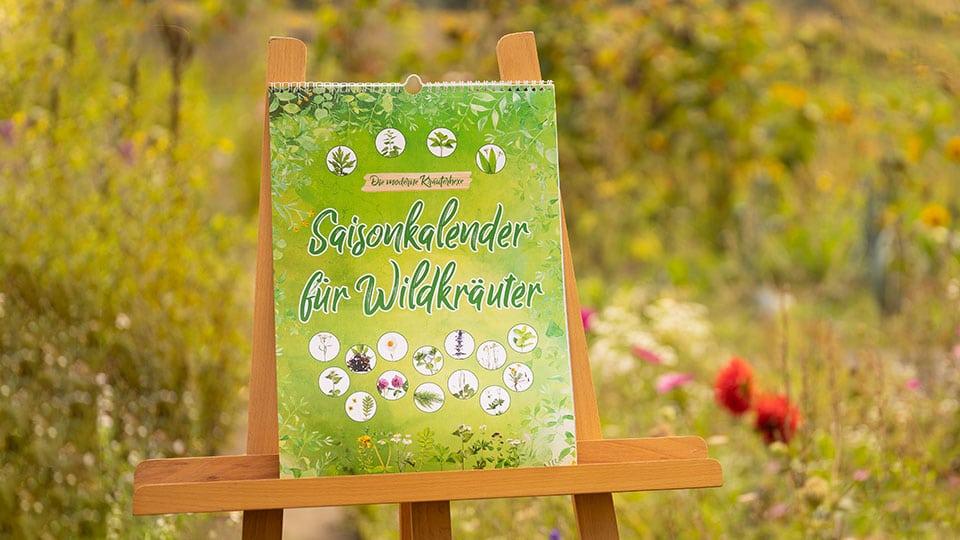 Unser Saisonkalender für Wildkräuter – Wir zeigen dir, wann du welche Wildkräuter ernten kannst