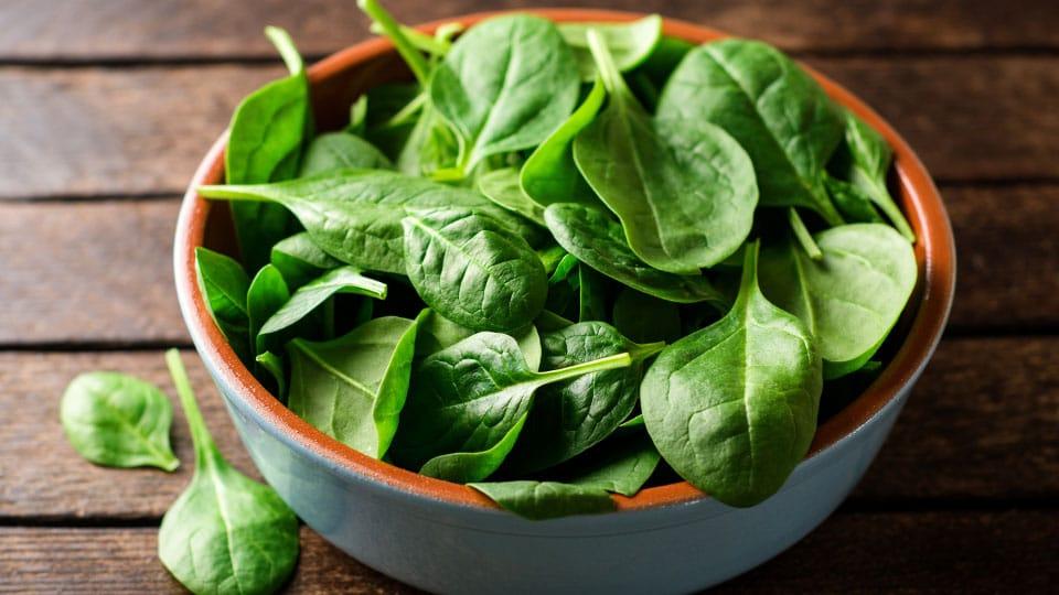 frisch gepflückter Spinat