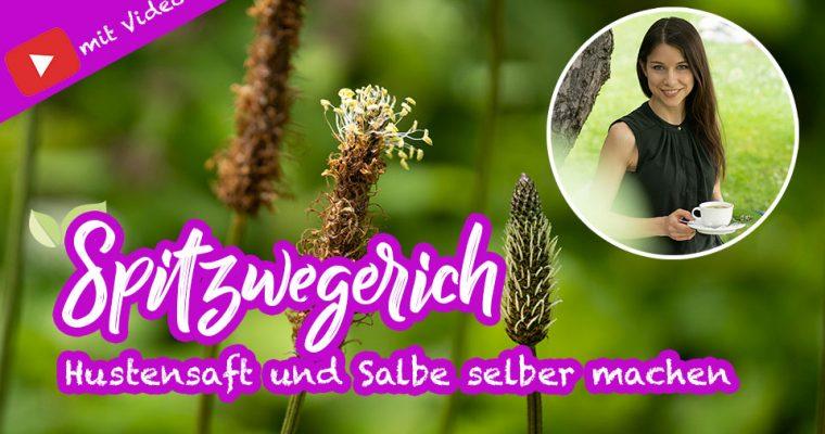 Spitzwegerich hilft bei Insektenstichen – Salbe & Hustensaft selber machen