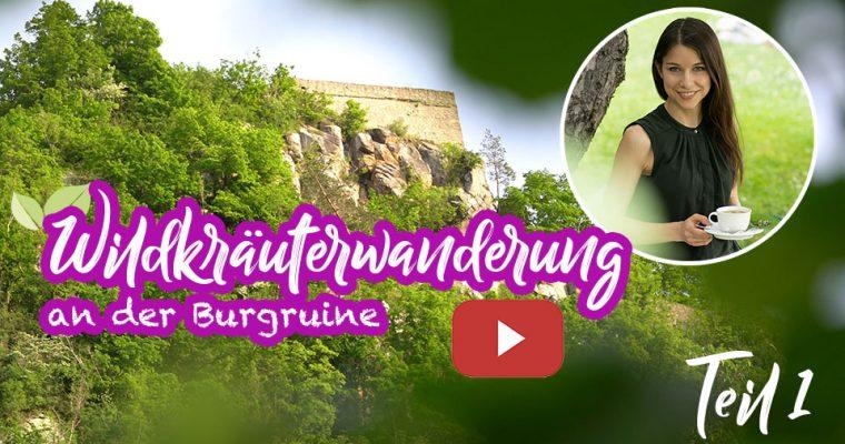 Wildkräuterwanderung an der Burgruine – Wildkräuter und Heilpflanzen im Wald erkennen