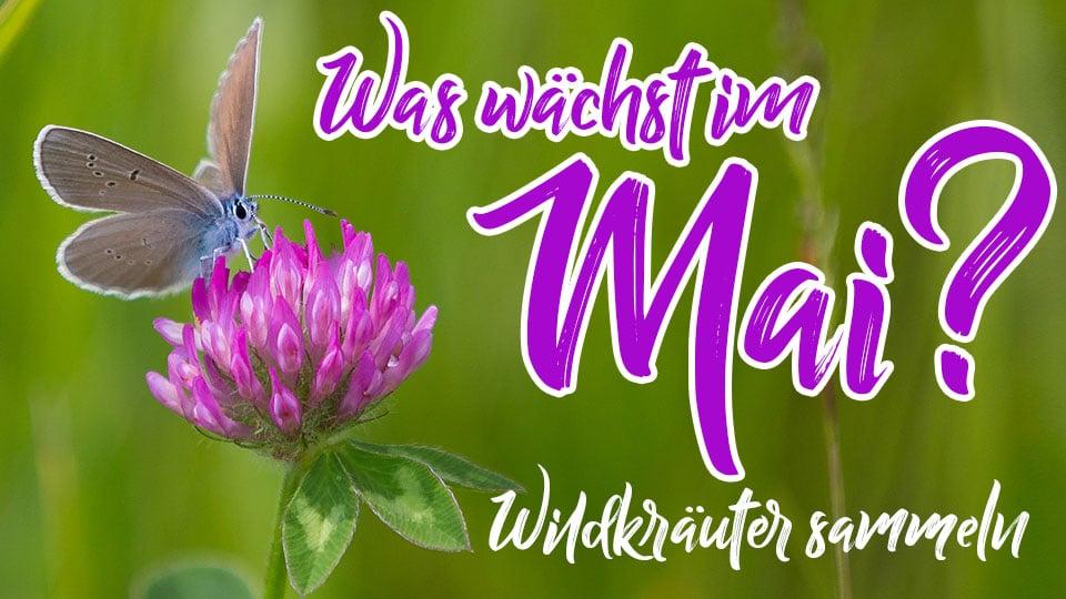 Wildkräuter und Heilpflanzen im Mai, die man jetzt sammeln sollte