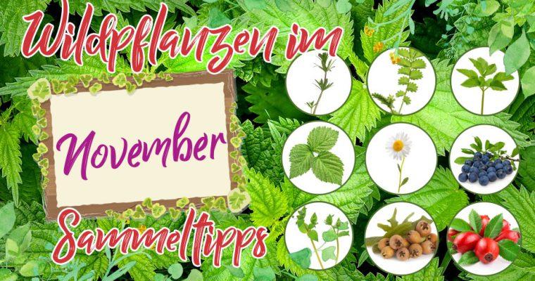 Wildkräuter im November – Was kann man im Spätherbst noch sammeln?