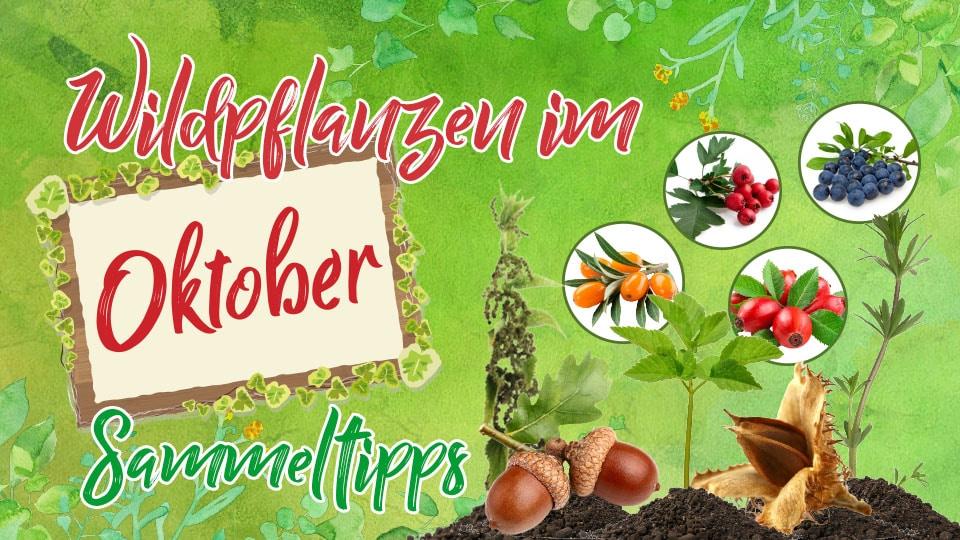 Wildpflanzen und Kräuter im Oktober – Saisonkalender